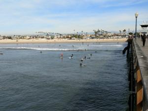 Seal_beach2