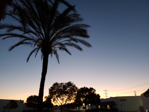 Sunset_palm_tree