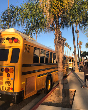School_bus_palm_tree