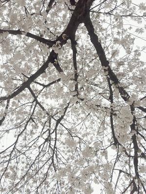 Huguchi_180322