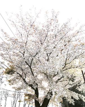Mss_0416_blog_1