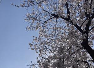 0407_photo_3