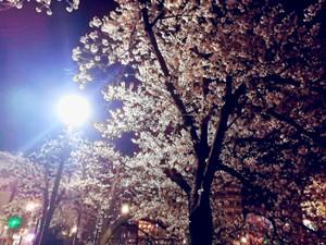 Photo_0331_3