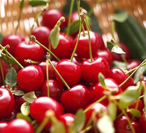 Cherry_img01